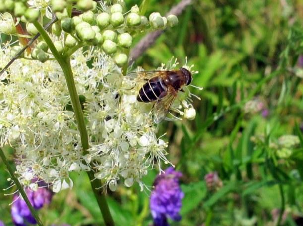 ...gesammelt von fleißigen Bienchen...