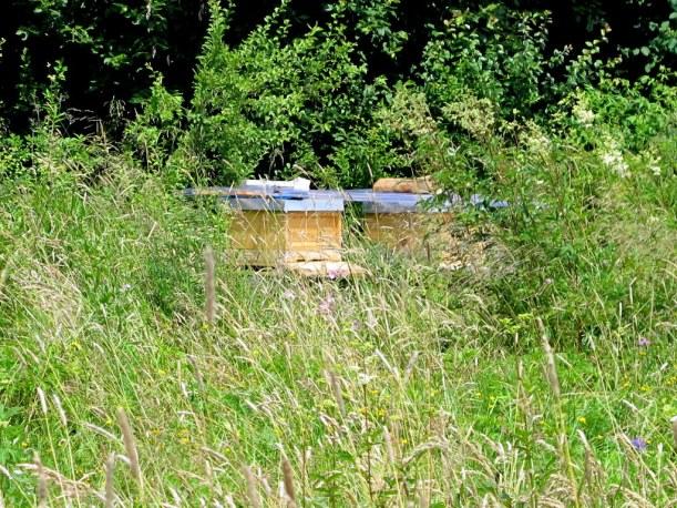 Bienenstöcke inmitten einer wunderschönen naturbelassenen Wiese - bester Wildblütenhonig!